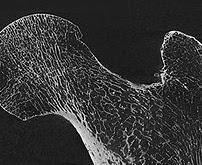 Micro & Nano Computed Tomography Advanced Imaging Core