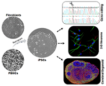 Human Stem Cell and Gene Editing Core (HSCGE)